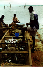 Fishermen cleaning their nets in Lake Volta